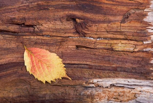 Coração colorido feito de folhas de outono em um fundo de madeira.