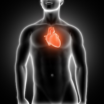 Coração com raios-x