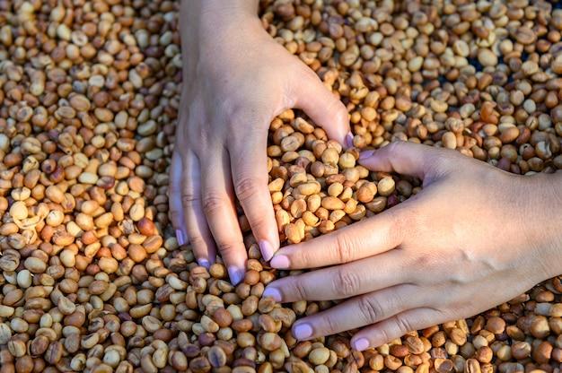Coração em forma de grãos de café com as mãos da mulher