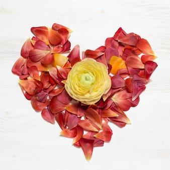 Coração feito de pétalas vermelhas com ranúnculo amarelo flor no centro vista superior na mesa de madeira branca