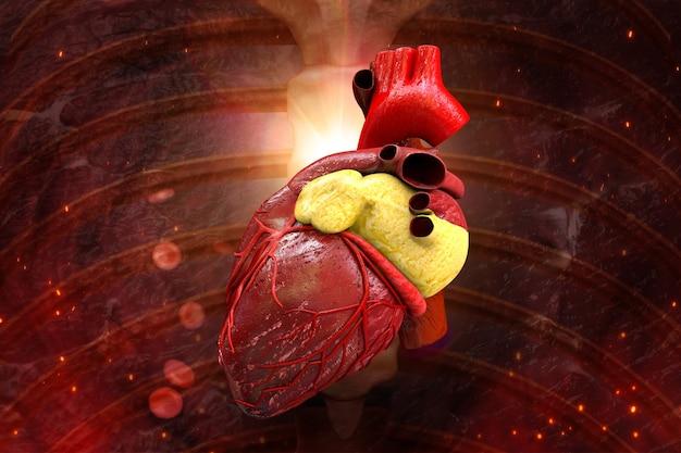 Coração humano dentro do corpo ilustração 3d