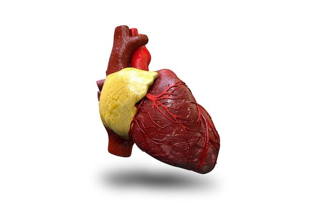 Coração humano em ilustração 3d de fundo branco