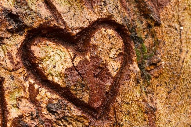 Coração na árvore