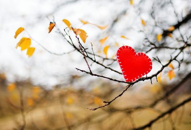 Coração vermelho de feltro em um galho de árvore