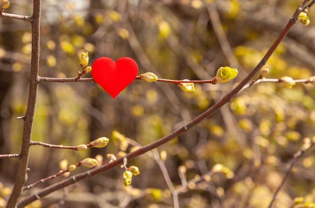 Coração vermelho em uma árvore na primavera. conceito da natureza do amor