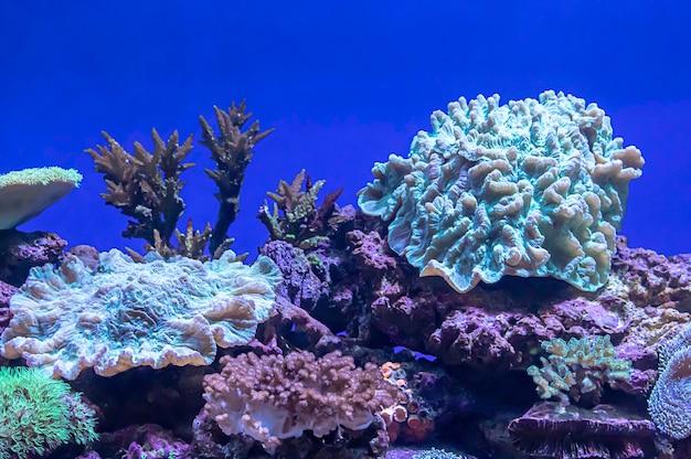 Corais coloridos sob o mar em tailândia.