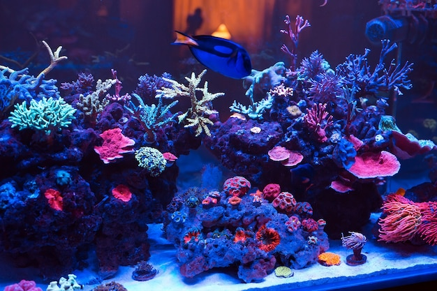 Corais em um aquário marinho.