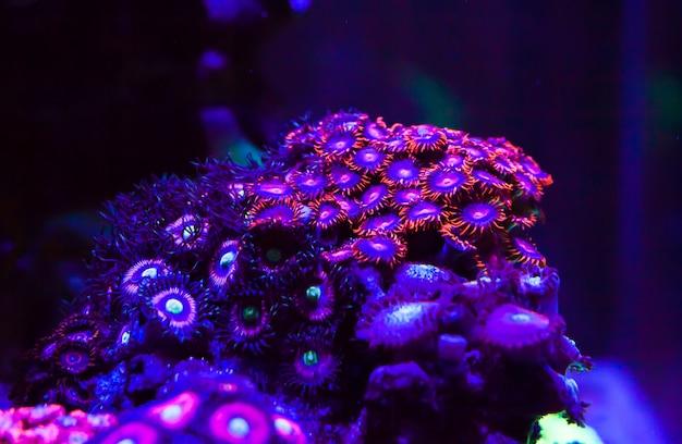 Corais vivos em um grande aquário marinho