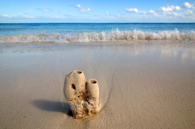 Coral ainda macro na areia do caribe, beira-mar