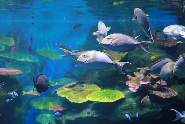 Coral e peixes no aquário