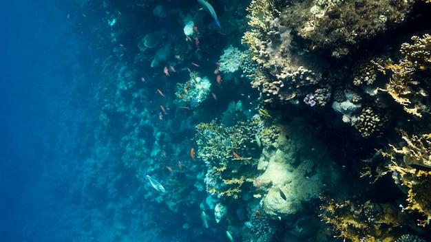 Coral reef no mar vermelho, egito. paisagem subaquática com peixes e recifes.