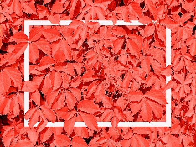 Coral vivo feito de folhas e moldura branca cartão de felicitações.