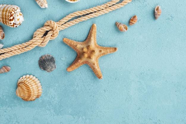Corda náutica de cópia espaço com mariscos