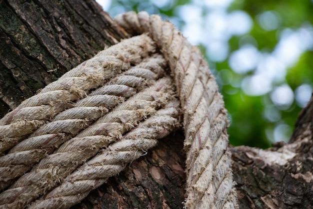 Corda velha no tronco de árvore