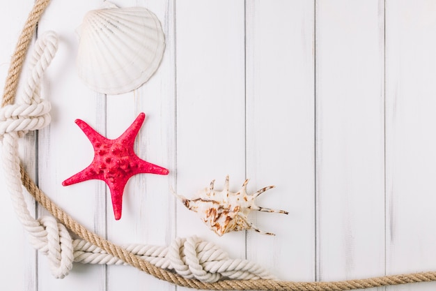 Cordas perto de conchas e estrelas do mar