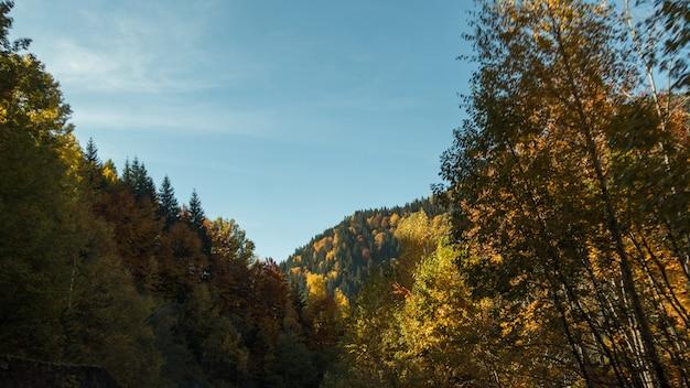 Cores agradáveis do outono a colina