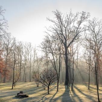 Cores vermelhas e coloridas do outono na floresta de faias no meio do nevoeiro