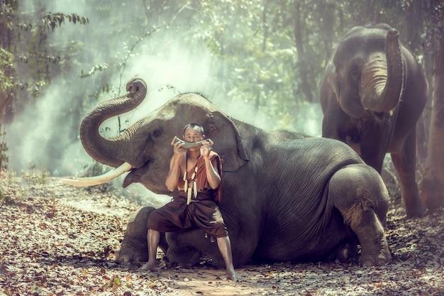 Cornaca sentado com um elefante e soprando chifres em uma floresta, surin, tailândia.