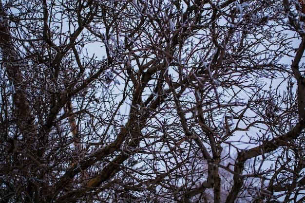 Coroa da árvore contra o céu galhos tempo nublado