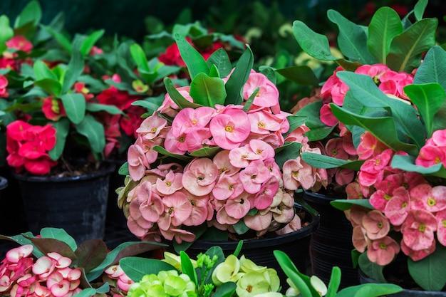 Coroa de flores de espinhos no parque