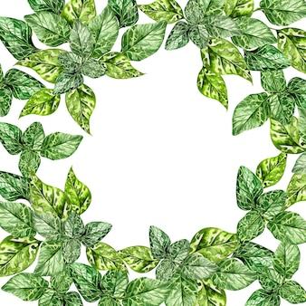 Coroa de flores em aquarela com folhas verdes de hortelã, moldura redonda em fundo branco