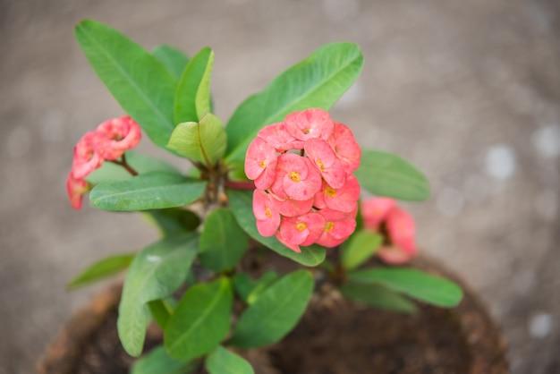 Coroa vermelha de flores de espinhos