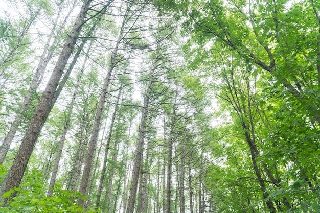 Coroas de árvores na floresta, dia de sol