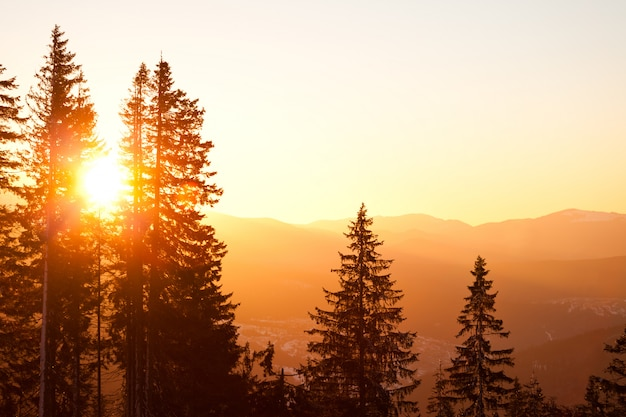 Coroas de pinheiro sobre colinas e vale fundo com pôr do sol dourado brilhante acima