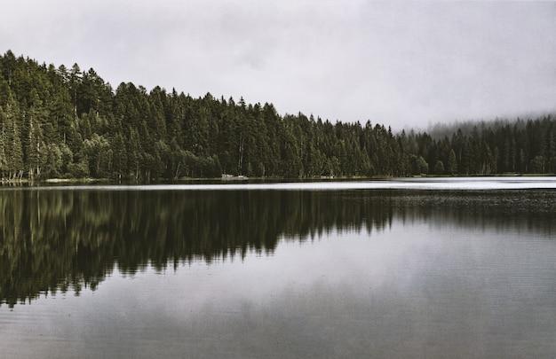 Corpo calmo de água ao lado da floresta