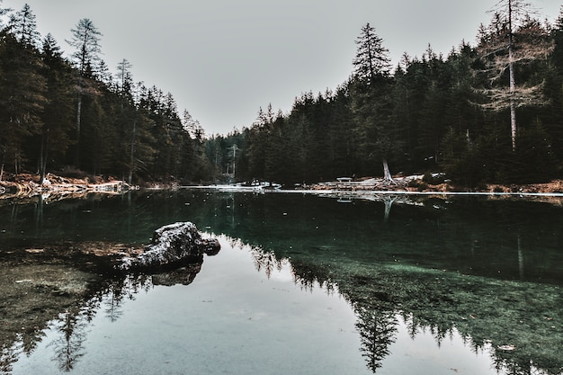 Corpo d'água através de árvores frondosas
