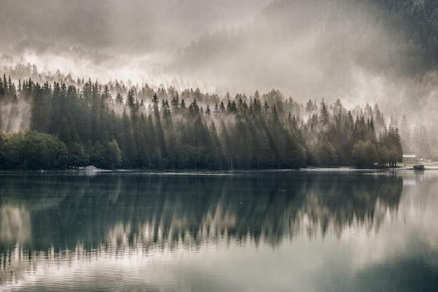 Corpo d'água perto de pinheiros