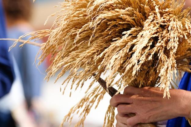 Corpo de arroz no desfile de colheita