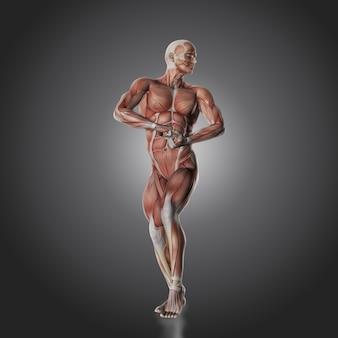 Corpo humano muscular