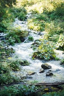 Córrego da cachoeira do rio em uma paisagem de floresta verde