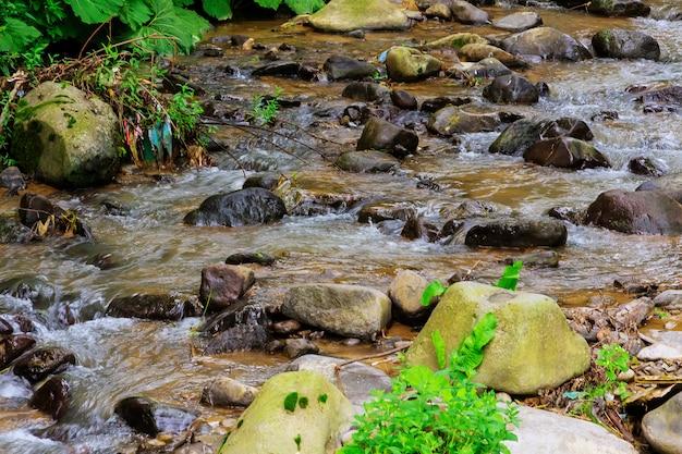 Córrego da montanha em uma floresta.