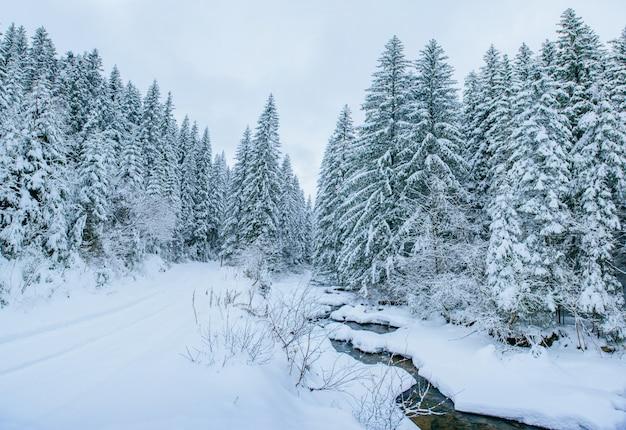 Córrego da montanha no inverno