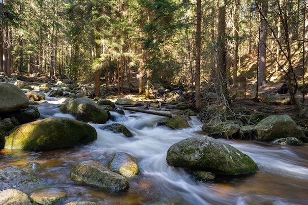 Córrego da montanha rochosa e árvores de goma