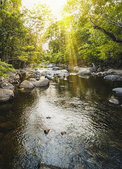 Córrego da montanha sobre a rocha musgosa em uma floresta profunda na cachoeira wang takrai nakorn nayok tailândia