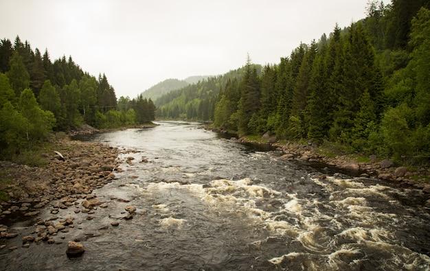 Córrego do rio na floresta