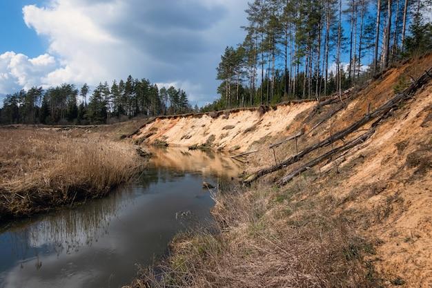 Córrego estreito do rio na floresta em um dia ensolarado.