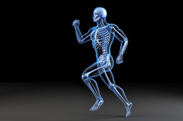 Correndo o esqueleto. ilustração anatômica 3d