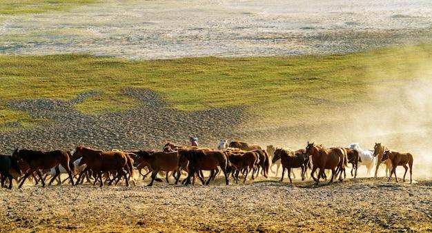 Correndo um grupo de cavalos