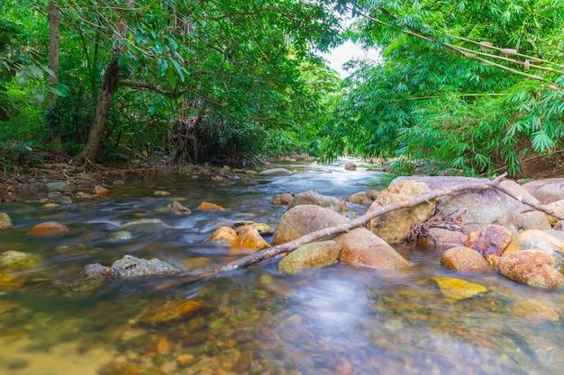 Corrente do rio na floresta