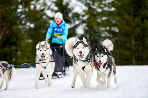 Corrida de cães de trenó husky. competição de equipes de trenó de esporte de cachorro de inverno