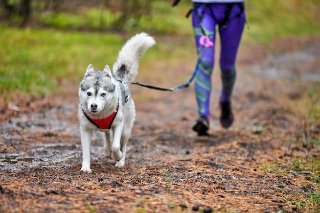 Corridas de cães canicross na natureza