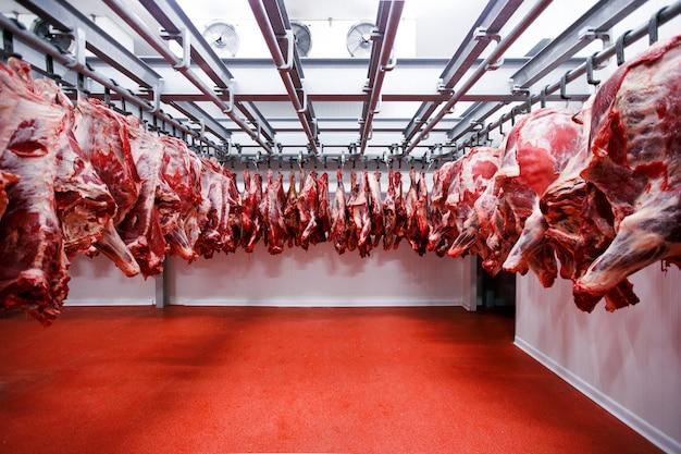 Cortado de meio pedaços de carne fresca, pendurados e dispostos em uma fileira em uma grande geladeira na indústria de carnes da geladeira.