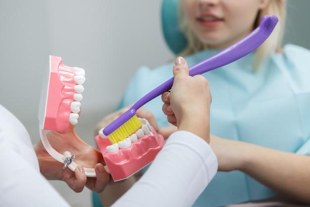 Cortado em close-up do modelo da mandíbula nas mãos do dentista mostrando a maneira correta de escovar os dentes