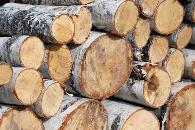 Cortado para uma fogueira de madeira de bétula