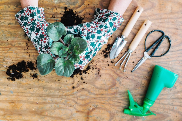 Cortar mãos plantando plantas