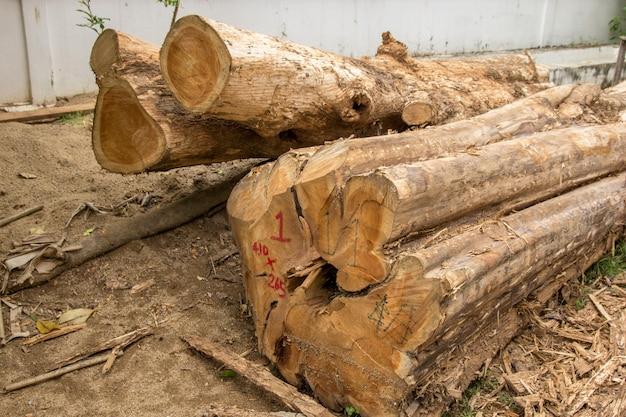 Cortar troncos de árvores ou pilha de toras de madeira